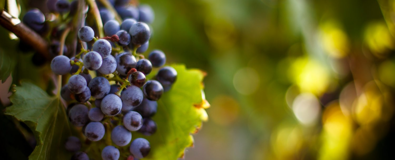 pocono-wineries.jpg
