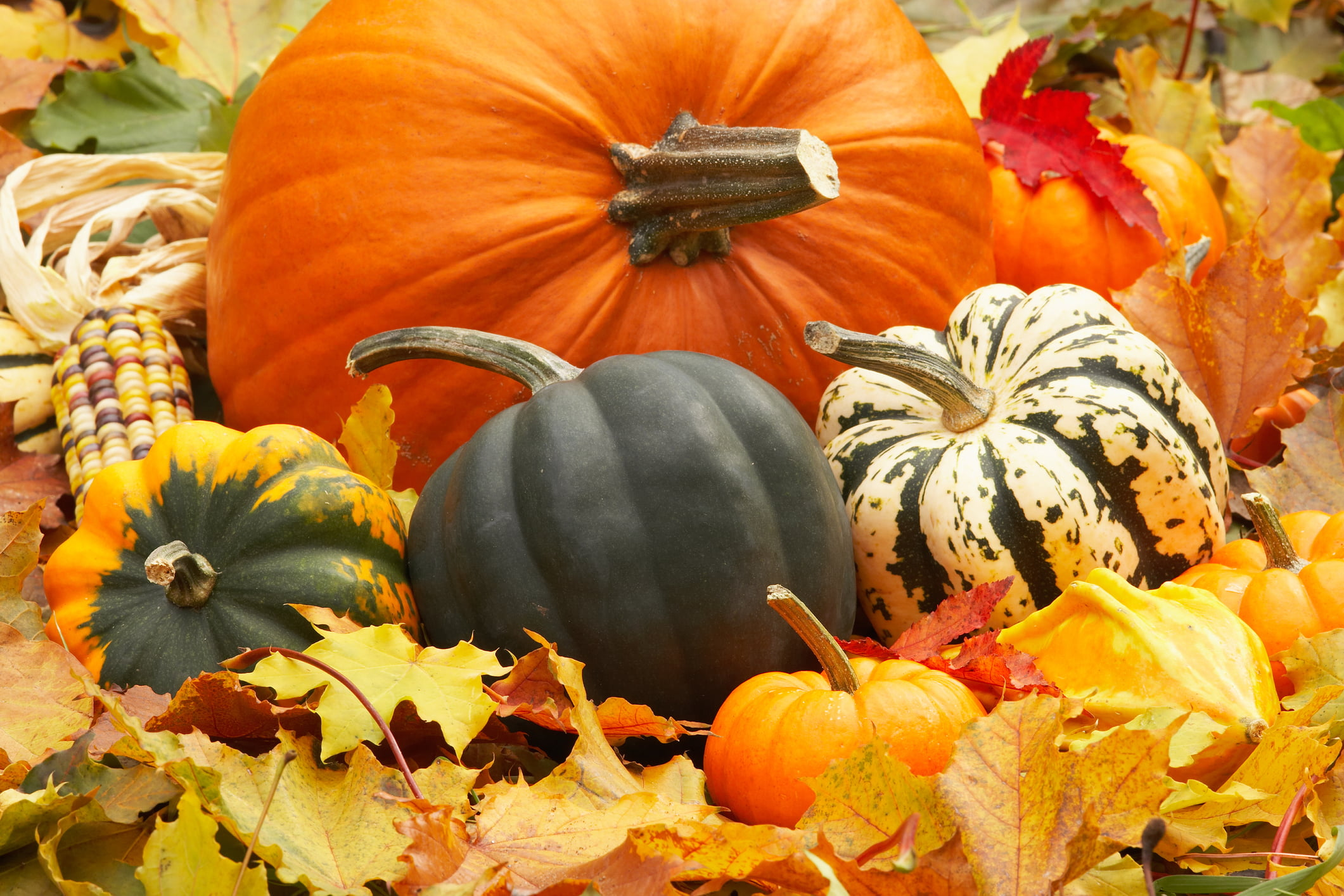 Image result for fall festival photos